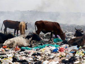Kenya pollution crackdown