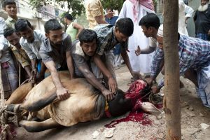 Slaughtering Animals on streets