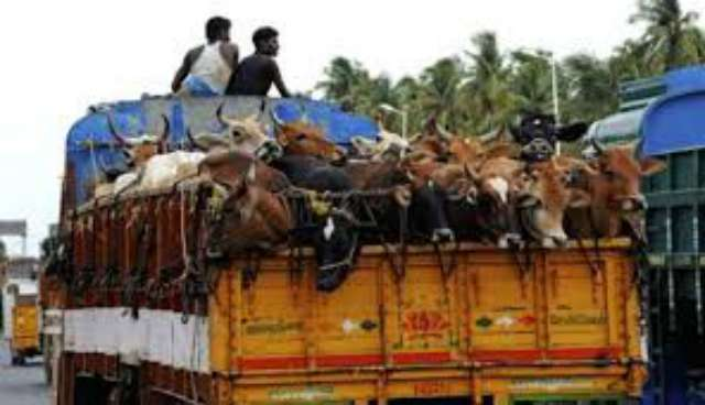 Bombay High Court on Beef Ban In Maharashtra