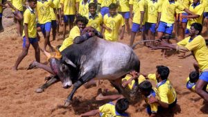 The Jallikattu sport that has been in tremendous controversy and has captured the Nation's attention for a very long time has been decided on to be Legal when the Tamil Nadu Assembly on
