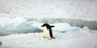 India to formulate law on Antarctica in order to safeguard its interest