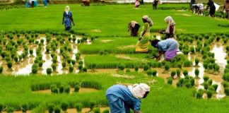 gst impact on agriculture