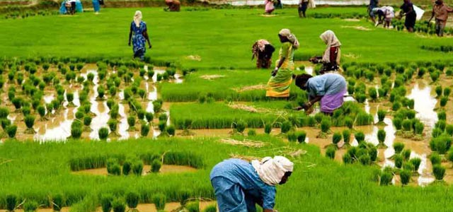 the impact of agricultural sector on Economic liberalization and industrial sector  sector while it has increasing impact on  infinitesimal marginal productivity in the agricultural sector.