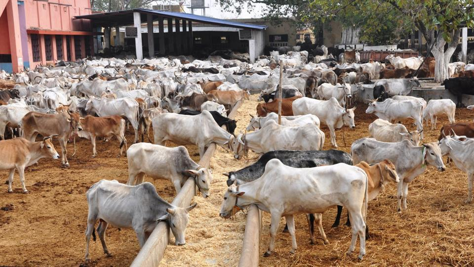 Supreme Court of India Suspends Centre's Order on cattle slaughter ban