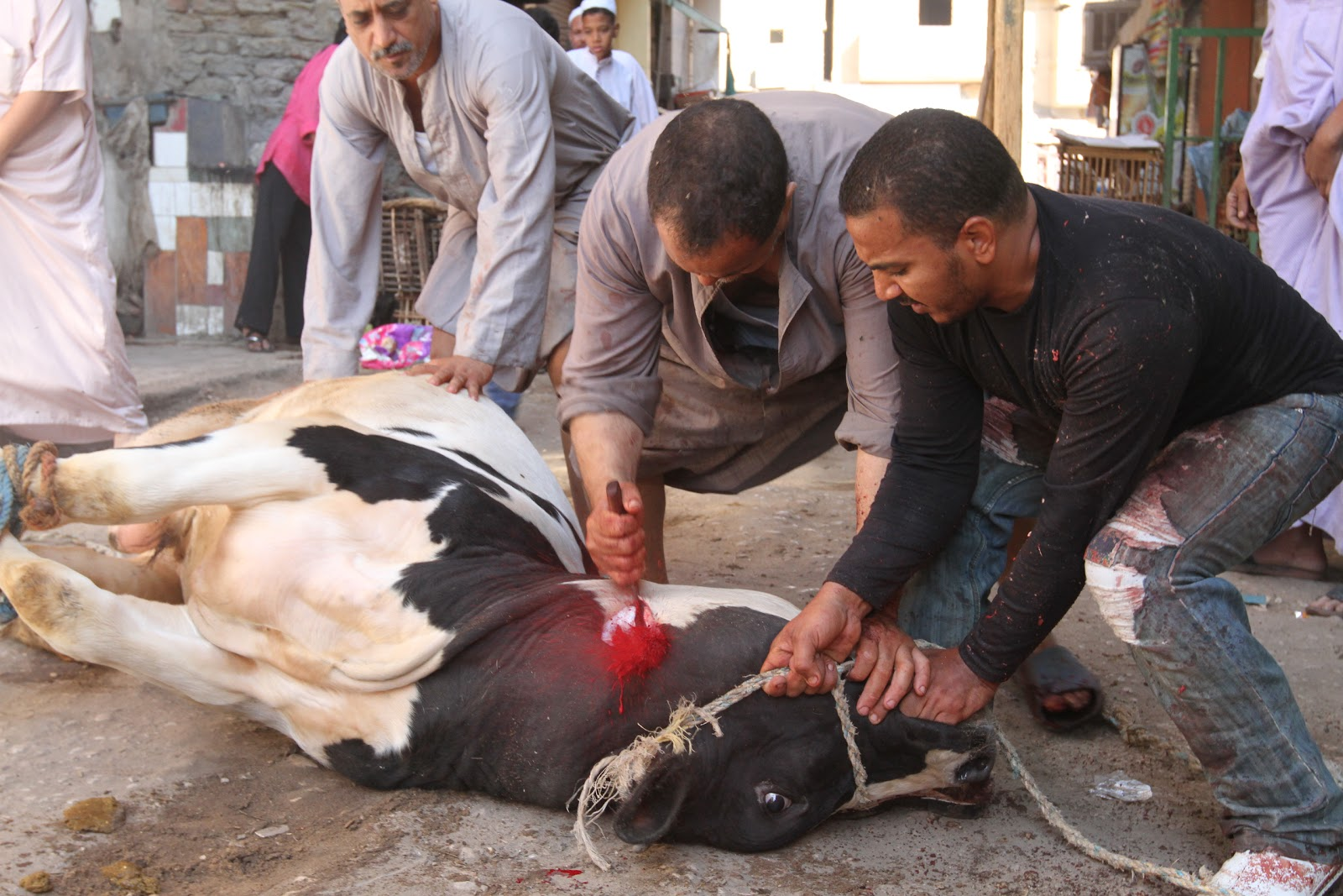Slaughtering Animals in Streets a Sin says Egypt's Top Religious Institution