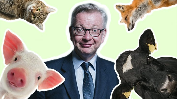 Michael Gove Censures Social Media Attacks After Animal Sentience Row