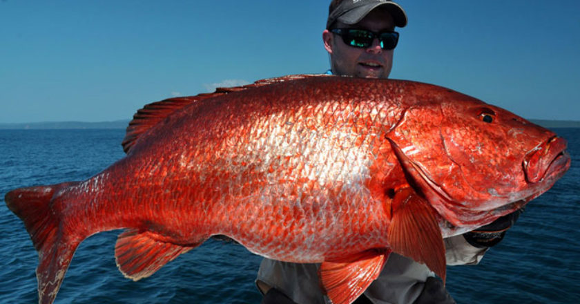 U.S. Commerce Department May Have Violated Red Snapper Fishery Management  Rules