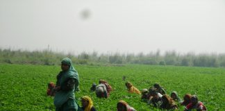 Govt. Must Introduce A Pesticide Management Law That Protects Farmers