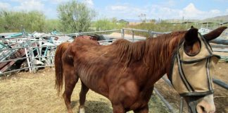 Horse Molestation Case Proves To Be A Challenge To Both Legal & Medical Experts