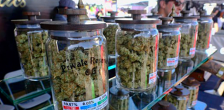 Pot Sales Becomes Legal in California, But Statewide Roll Out Pending