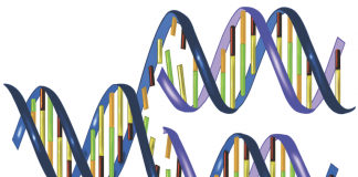 Experts Urge Use Of DNA Casework As Evidence To Combat Rising Sexual Crimes