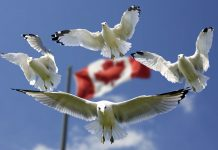 Immigration Canada-Top three way to migrate to Canada